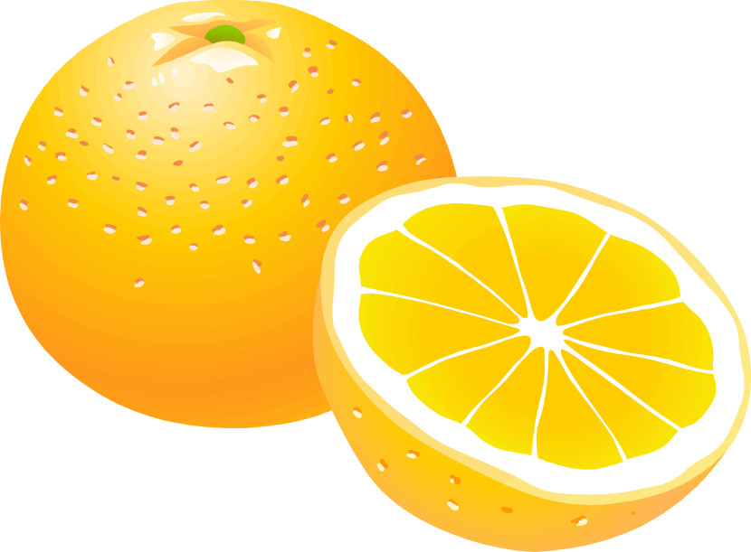 Best Orange Clipart #13392 - Clipartion.com