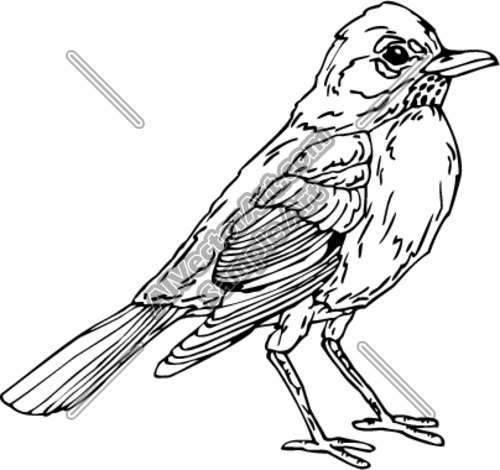 Clipartvector Art Of Robin Clipart Free Clip Art Images