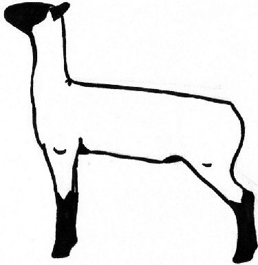 Club Show Lambs Clipart Raising Sheep Picking A Show Lamb Part