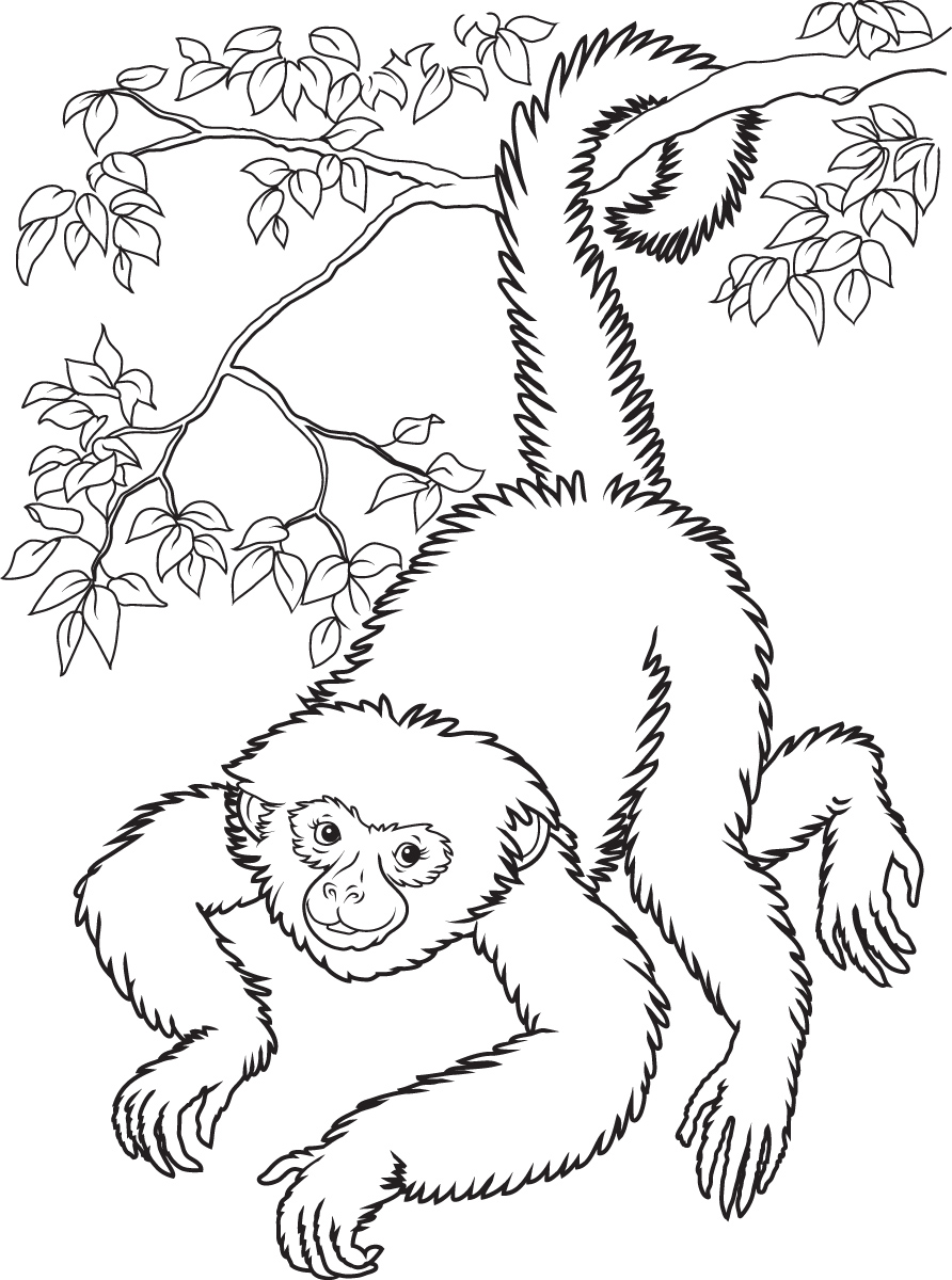Coloring Pages Of Monkeys To Print