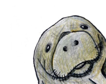 Cute Manatee Clipart Free Clip Art Images