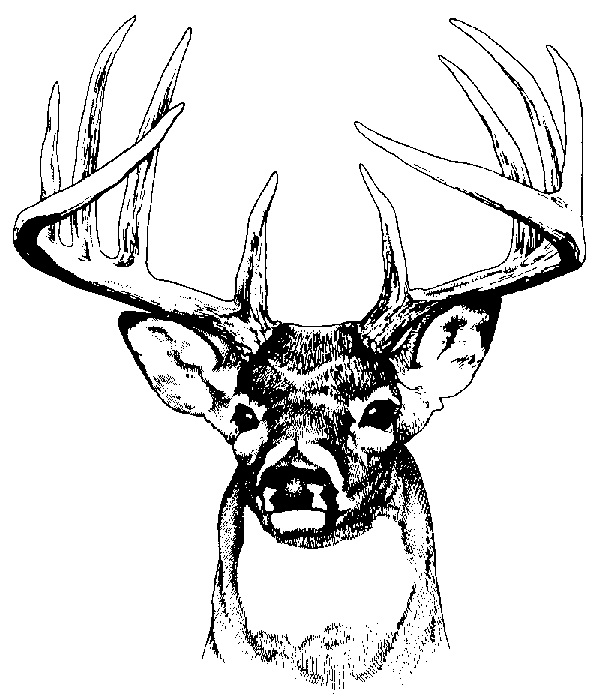 Deer Hunting Clipart