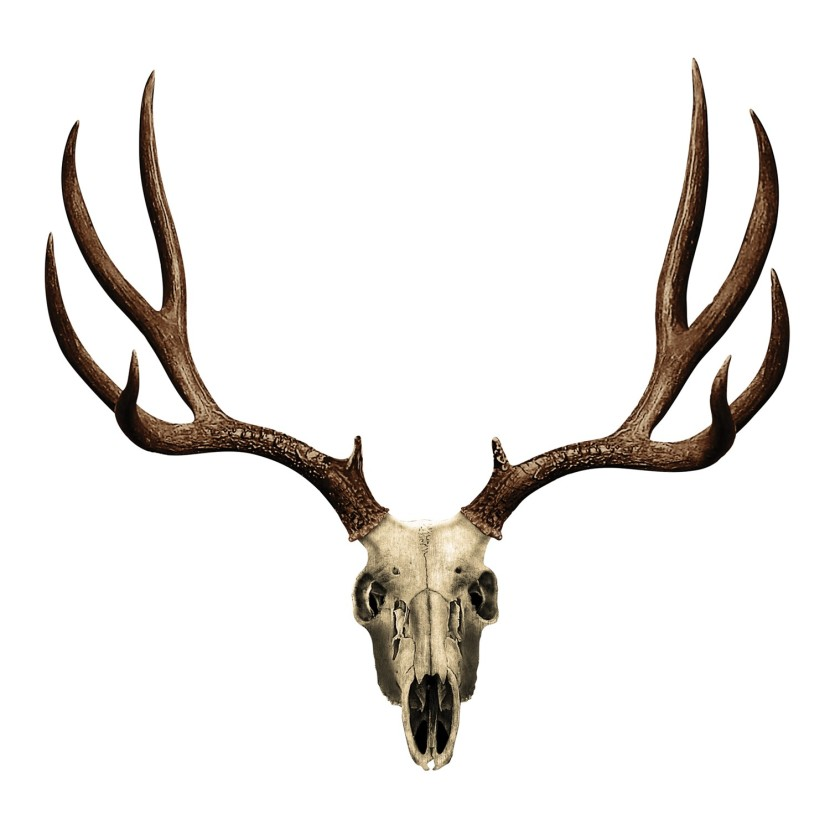 Deer Skull With Antlers Clipart Free Clip Art Images