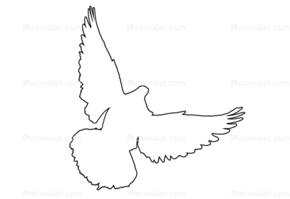 Dove Outline Line Drawing Images Photography Stock Pictures