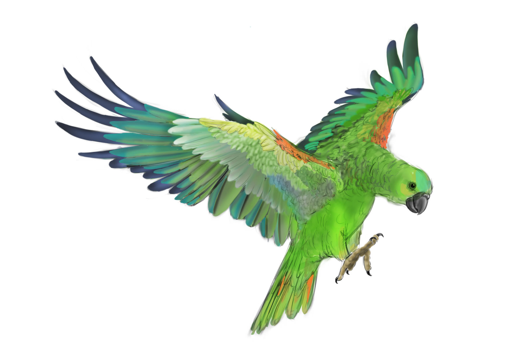 Download Green Parrot Clipart With No Watermark Imagegator