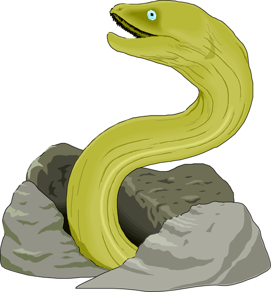Eel Clip Art Free Free Clipart Images