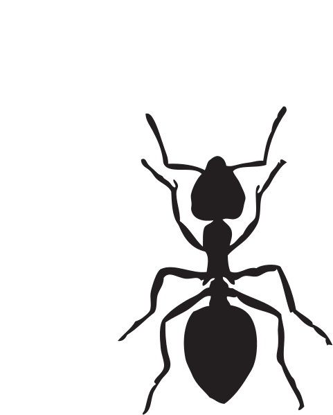 File Ant Clipart Wikimedia Commons
