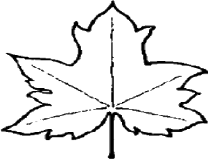 File Leaf Outline Png Wikipedia The Free Encyclopedia
