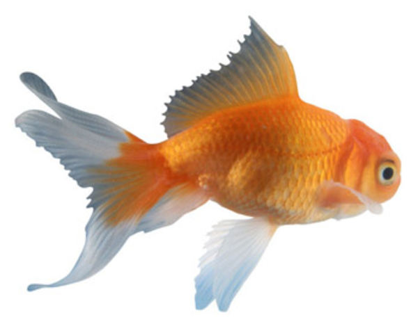 Fish Free Images At Vector Clip Art Online