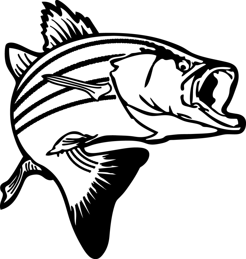 Best Bass Fish Outline #18267 - Clipartion.com