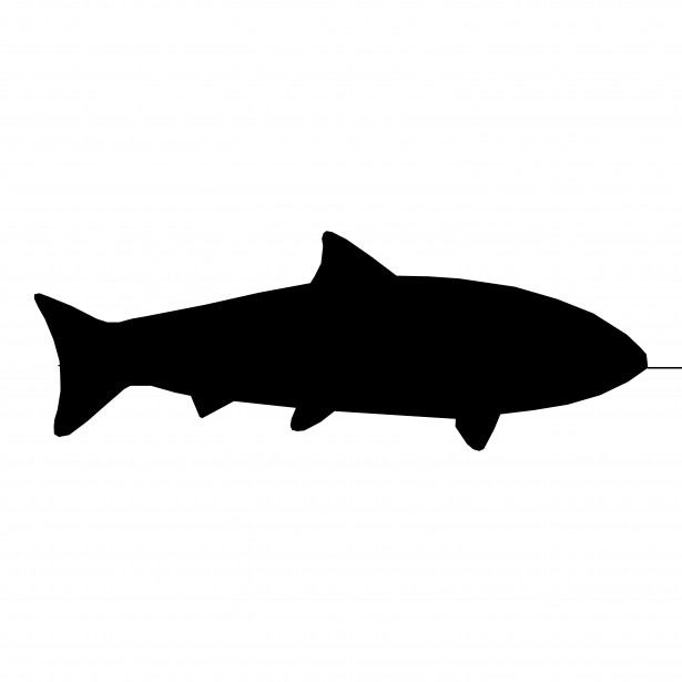 Fish Silhouette Free Stock Photo Public Domain Pictures