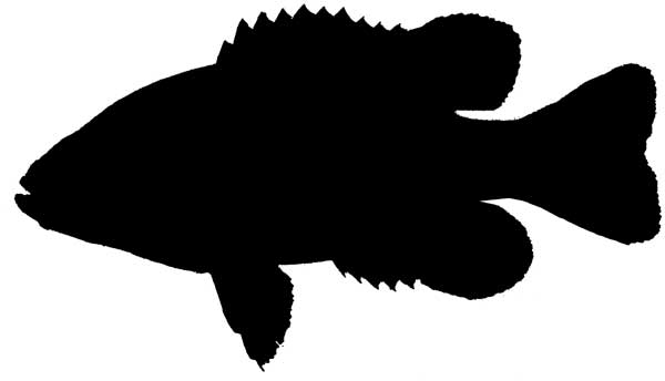 Fish Silhouette Images Amp Pictures Findpik