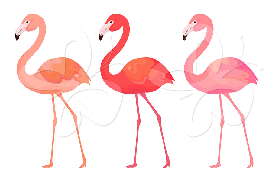 Flamingo Clipart Set Creative Clipart Collection