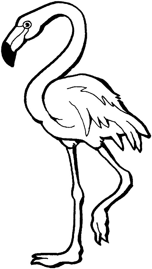 Flamingo Coloring Pages Free Clipart Images