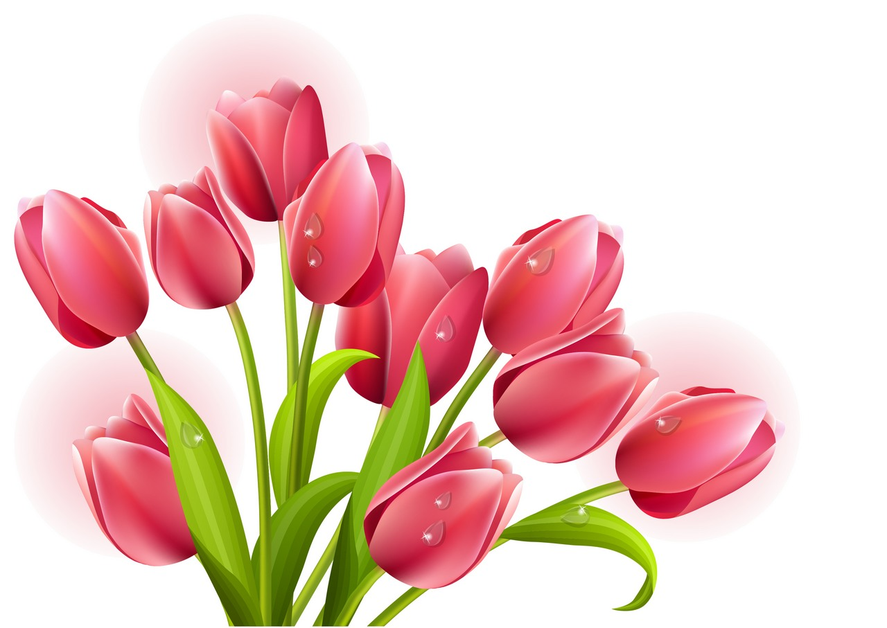 best tulip clipart 10867 clipartion com free tulip clip art to print free tulip clipart borders