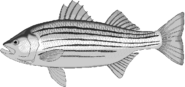 Free Bass Clipart Clipart Picture 2 Of 2