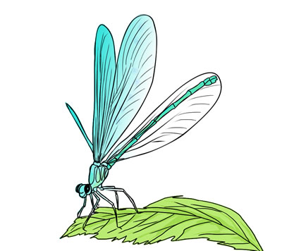 Free Dragonfly Clip Art 5