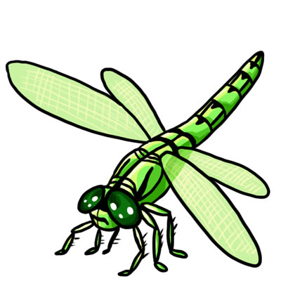 Free Dragonfly Clip Art Drawings And Colorful Images