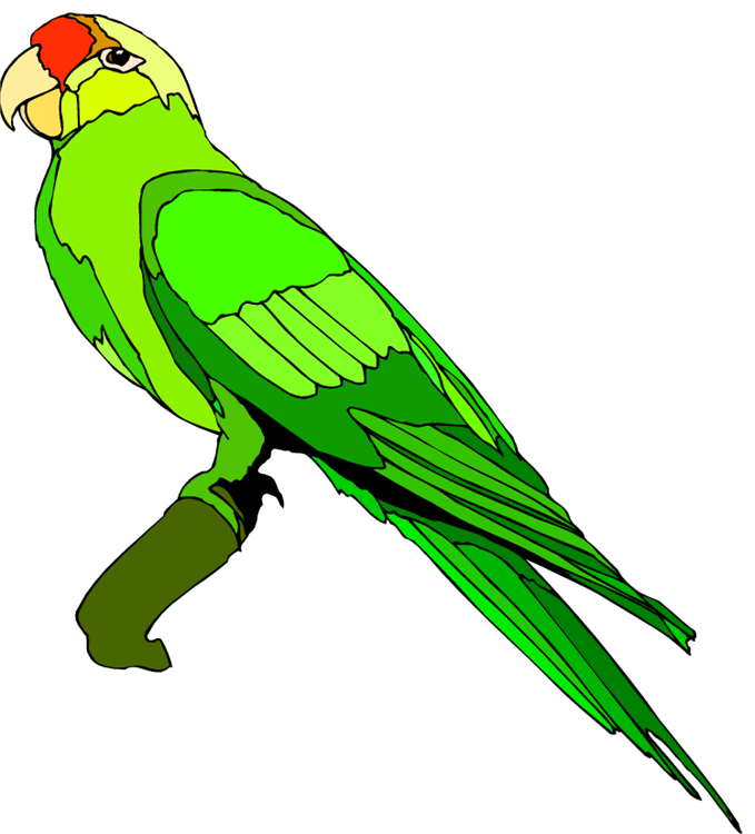 Free Parrot And Macaw Clipart