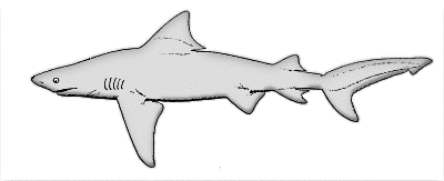 Free Sharks Clipart Free Clipart Images Graphics Animateds