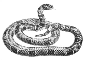 Free Snakes Clipart Free Clipart Graphics Images And Photos