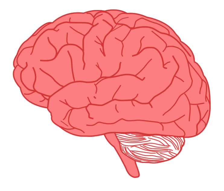 Free To Use Amp Public Domain Brain Clip Art