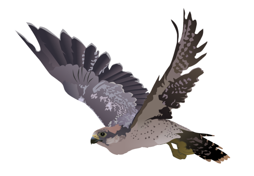 Free To Use Amp Public Domain Falcon Clip Art