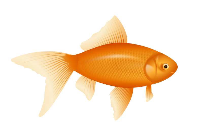 Free To Use Amp Public Domain Goldfish Clip Art