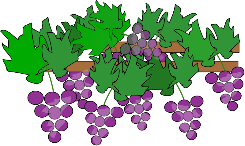 Free To Use Amp Public Domain Grapes Clip Art