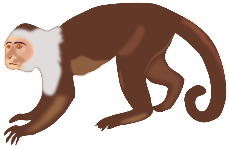 Free To Use Amp Public Domain Monkey Clip Art