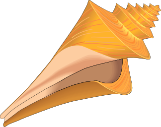 Free To Use Amp Public Domain Seashell Clip Art