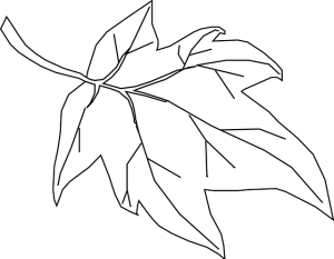 Free Vector Graphic Maple Leaf Outline Tree Nature Free