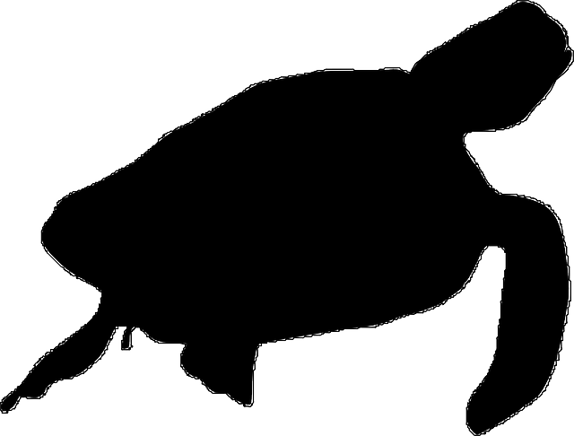 turtle silhouette clipartion com black and white animal clip art octopus black and white animal clipart images skunk