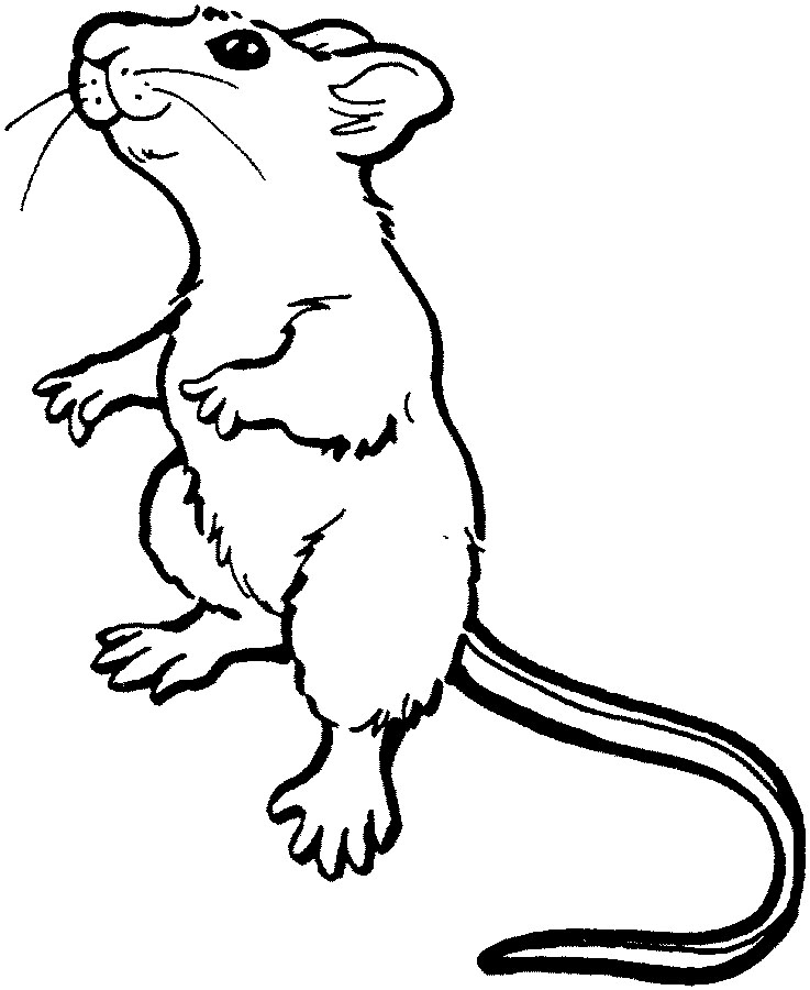 Gerbil Clip Art Royalty Free Rf Clipart Illustration Of A