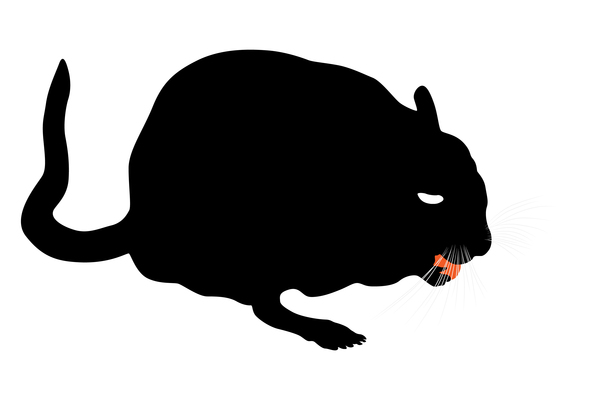 Gerbil Eating An Apple Royalty Free Picture Clipart Free Clip