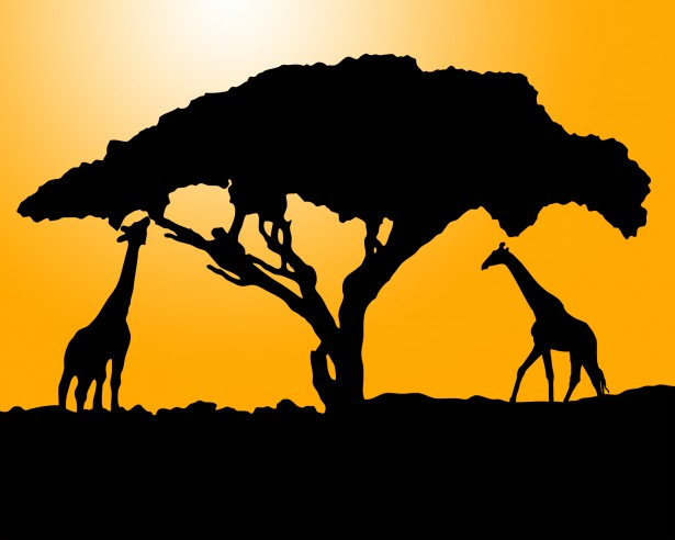 Giraffe Silhouette At Sunset Free Stock Photo Public Domain Pictures