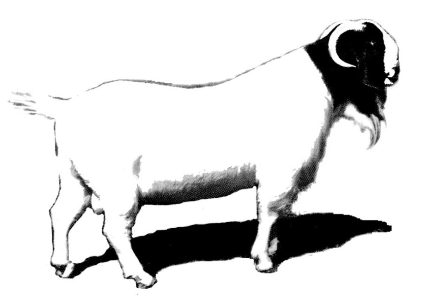 Goat Clip Art Goatworld Articles Goatworld Com