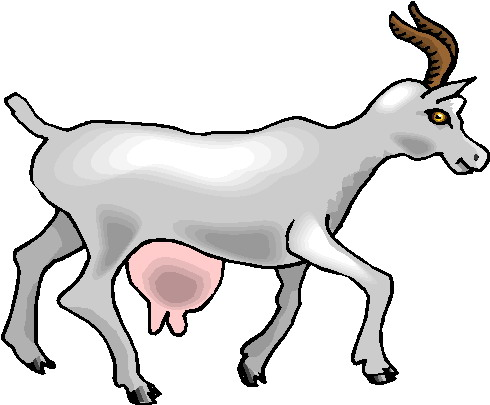 Goat On A White Background Vector Illustration Stock Clipart