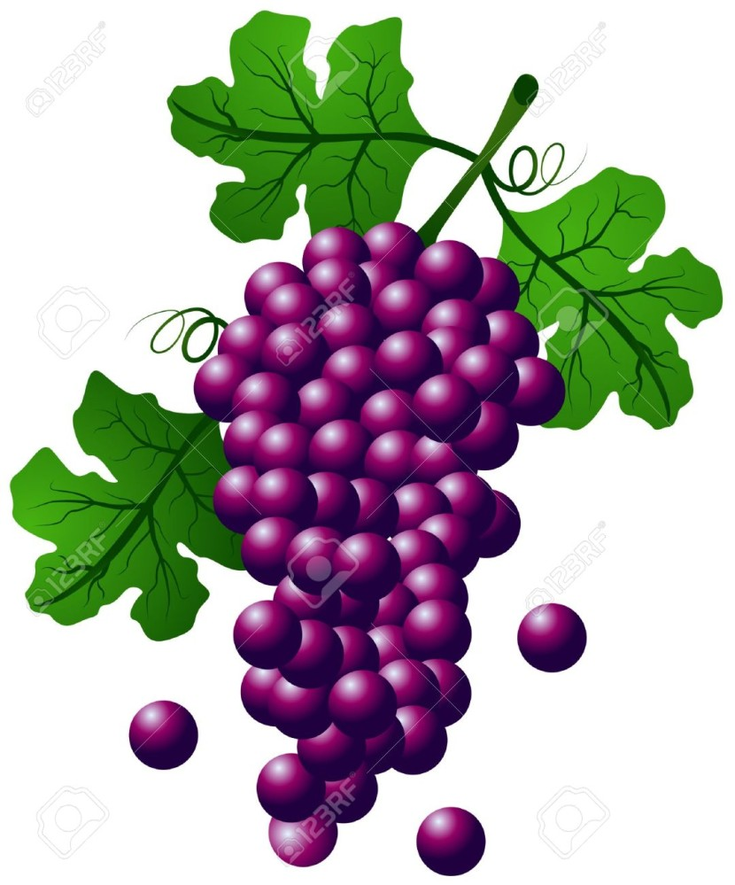 Grapes Clipart - Clipartion.com