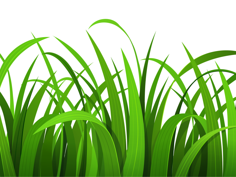 Grass Clipart Hd Wallpaper Voritos Com