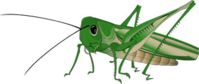 Grasshopper Clipart - Clipartion.com