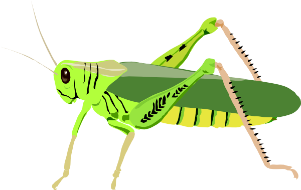 Grasshopper Clipart Black And White Free Clipart
