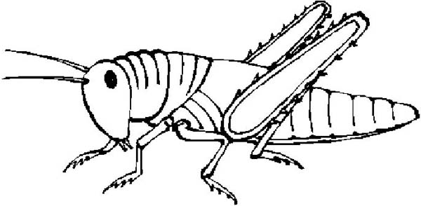 Grasshopper Clipart Coloring Page Kids Play Color