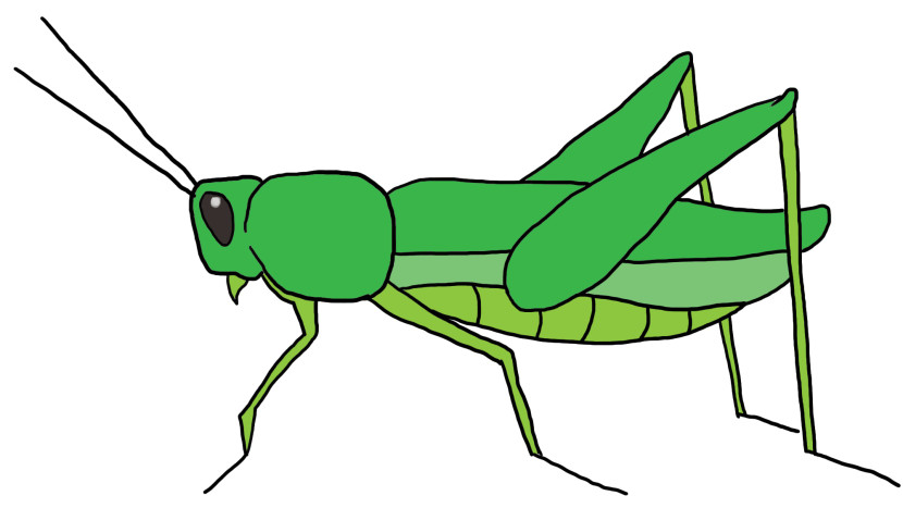 Grasshopper Drawing Outline Free Clipart Images