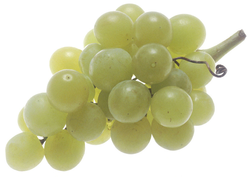 Green Grapes Clipart Free Clip Art Images