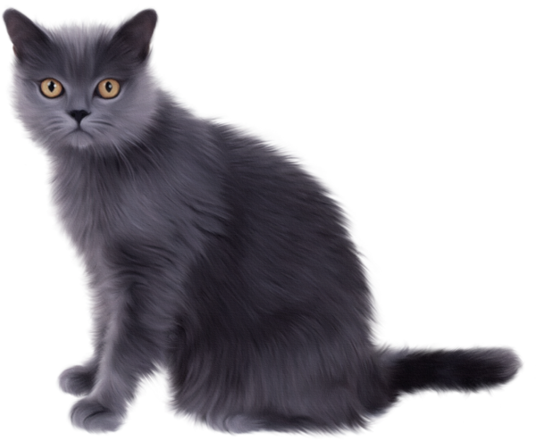 Grey Cat Clip Art Realistic Uselive