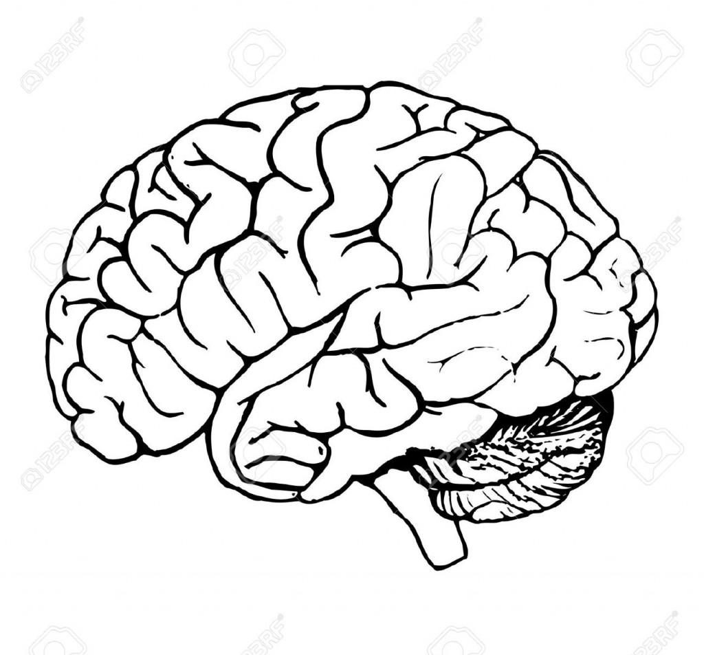 Best Brain Clipart #6084 - Clipartion.com