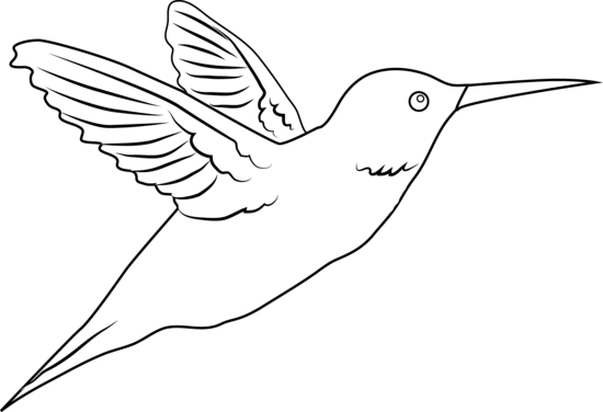 Hummingbird Coloring Page Free Clip Art