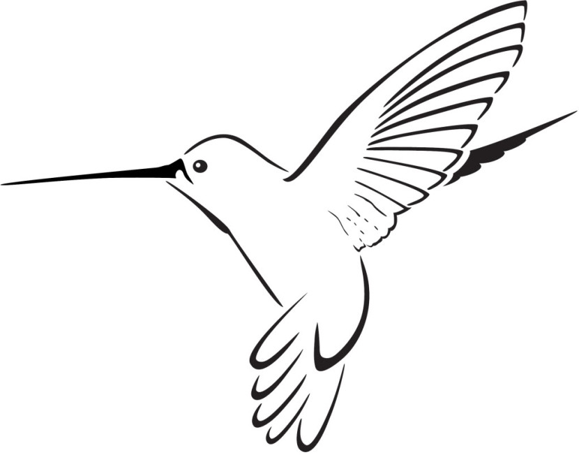 Hummingbird Drawing Clip Art