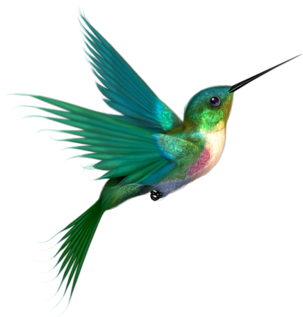 Hummingbird Graphics And Comments
